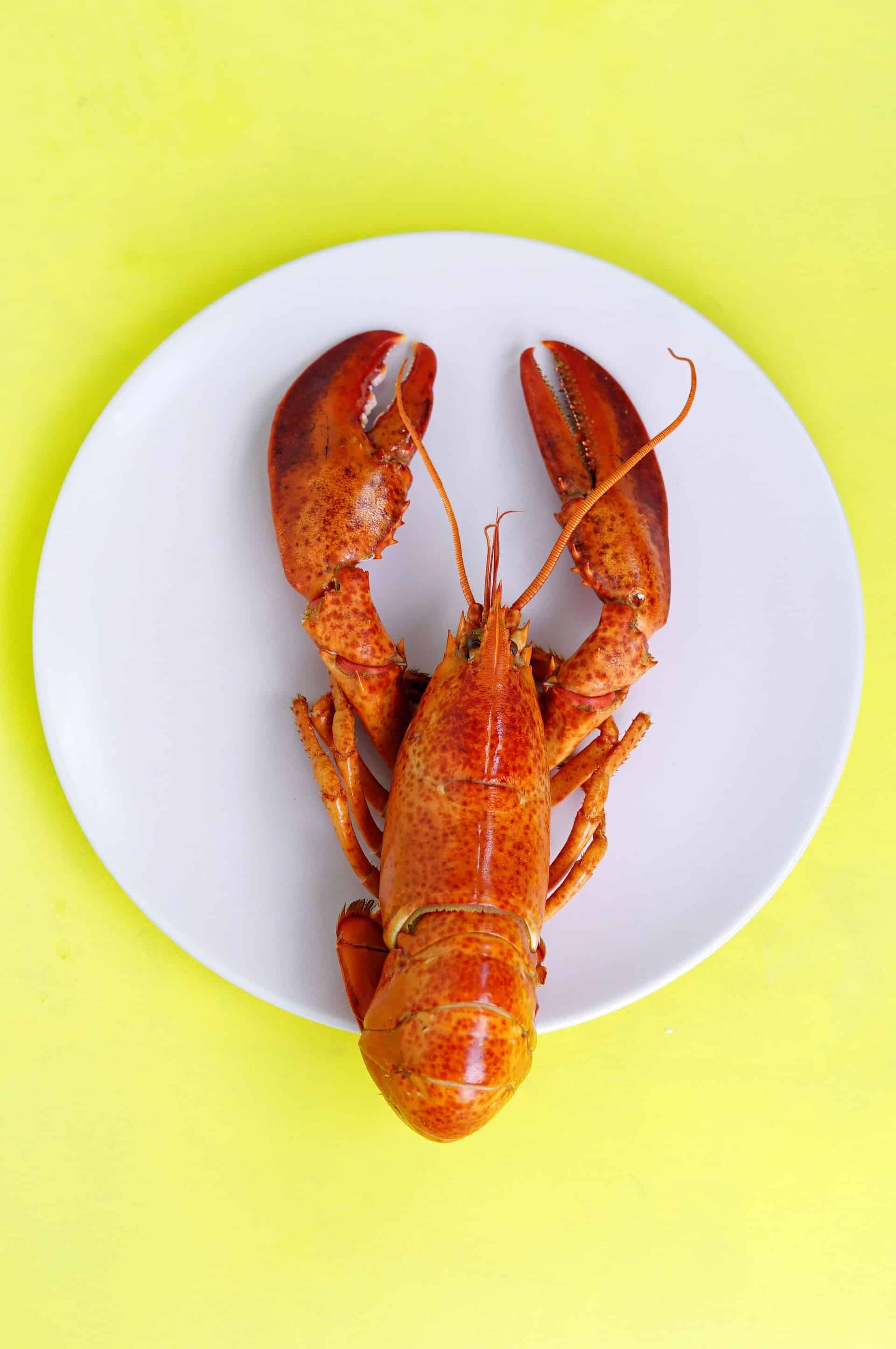 Seafood for Toddlers
